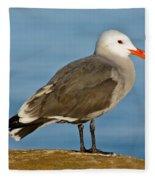 Heermanns Gull On Rock Fleece Blanket