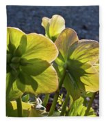 Helleborus Backlight Blossoms 2 Fleece Blanket