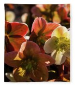 Helleborus Backlight Blossoms Fleece Blanket