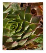 Hens And Chicks Sedum 1 Fleece Blanket