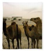 Herd Of Camels In A Farm, Abu Dhabi Fleece Blanket