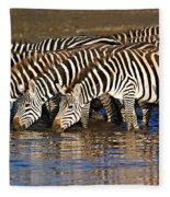 Herd Of Zebras Drinking Water Fleece Blanket