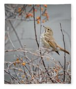 Hermit Thrush Fleece Blanket