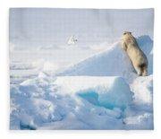 Hide And Seek, Ursus Maritimes, Fulmars Fleece Blanket