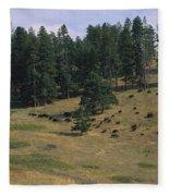 High Angle View Of Bisons Grazing Fleece Blanket