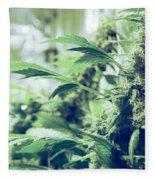 Home Grown Cannabis Plants. Fleece Blanket