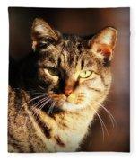 Homeless Cat Fleece Blanket
