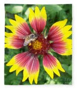Honey Bee On A Indian Blanket Fleece Blanket