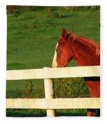 Horse And White Fence Fleece Blanket