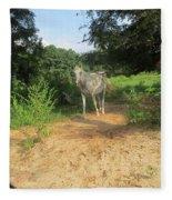 Horse Walks Toward Camera Fleece Blanket