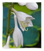 Hosta Fleece Blanket