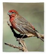 House Finch Carpodacus Mexicanus Fleece Blanket