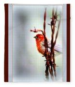 House Finch - Finch 2241-004 Fleece Blanket