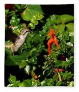 Humming Bird Honeysuckle Fleece Blanket