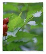 Humming Buds By Jammer Fleece Blanket