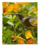 Hummingbird Looking For Food Fleece Blanket