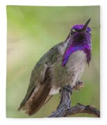 Hummingbird Male Costa Fleece Blanket