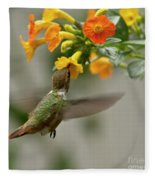 Hummingbird Sips Nectar Fleece Blanket