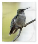 Hummingbird Sitting On A Branch Fleece Blanket