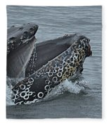 Humpback Whale  Lunge Feeding 2013 In Monterey Bay Fleece Blanket