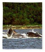 Humpback Whales Feeding Fleece Blanket