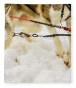 Husky Sled Dogs, Lapland, Finland Fleece Blanket