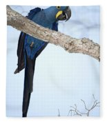 Hyacinth Macaw Anodorhynchus Fleece Blanket