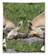 Ibex Doing Battle Fleece Blanket