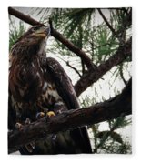 Immature American Bald Eagle Fleece Blanket