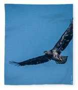 Immature Bald Eagle In Flight Fleece Blanket