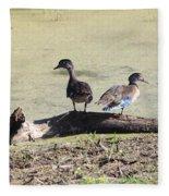 Immature Wood Ducks Fleece Blanket