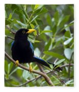 Immature Yucatan Jay Fleece Blanket