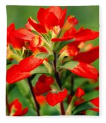 Indian Paintbrush I I Fleece Blanket