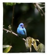 Indigo Bunting - Img-428-003 Fleece Blanket