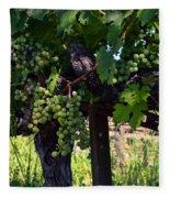 Inglenook Vineyard -11 Fleece Blanket