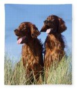 Irish Red Setter Dog Fleece Blanket