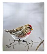 Irruptive Bird Common Redpoll Fleece Blanket