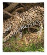 Jaguar Panthera Onca Foraging Fleece Blanket
