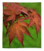 Japanese Maple Autumn Colors Fleece Blanket