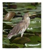 Javan Pond Heron Dthn0071 Fleece Blanket