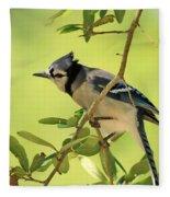 Jay In Nature Fleece Blanket