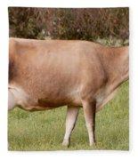 Jersey Cow In Pasture Fleece Blanket