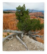 Juniper Tree Clings To The Canyon Edge Fleece Blanket