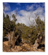 Juniper Trees At The Ghost Ranch Color Fleece Blanket