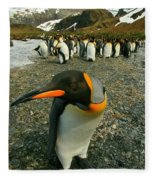 Juvenile King Penguin Fleece Blanket