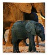 Kalahari Elephants Fleece Blanket