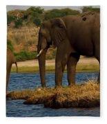 Kalahari Elephants Preparing To Cross Chobe River Fleece Blanket