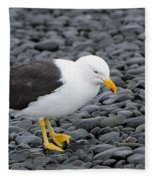 Kelp Gull Fleece Blanket