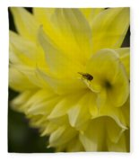 Kelvin Floodlight Dahlia Fleece Blanket