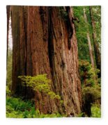 Kevin And The Big Tree - Redwood National Forest Fleece Blanket
